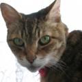 ネコ6(宮西)