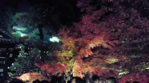 永観堂 紅葉と多宝塔